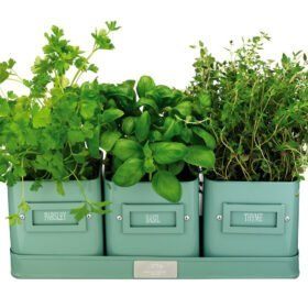 What-Herbs-Can-You-Plant-Together