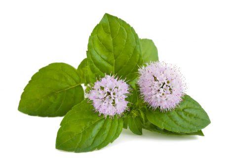 mint-flowers